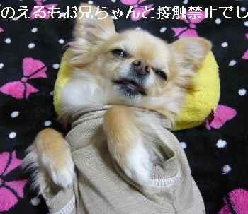 blog2011032306.jpg