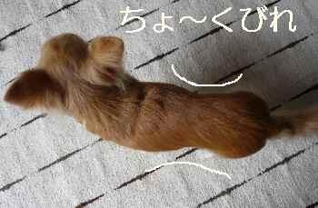 blog2011032401.jpg