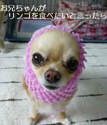 blog2011032501.jpg