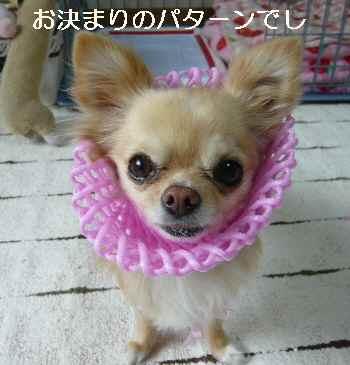 blog2011032502.jpg