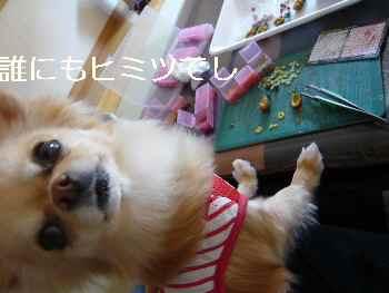 blog2011032702.jpg