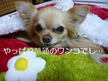 blog2011032902.jpg
