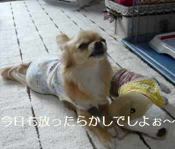 blog2011033005.jpg