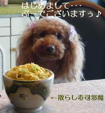 blog2011033103.jpg