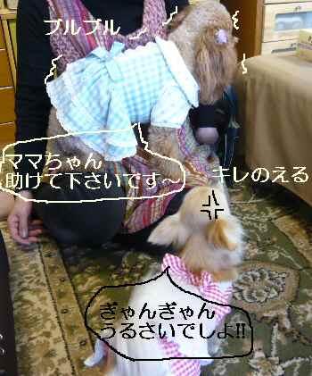 blog2011033105.jpg