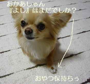 blog2011040104.jpg