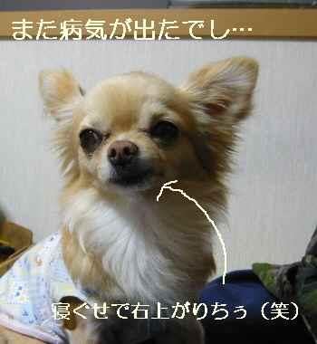 blog2011040201.jpg