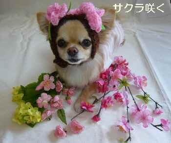 blog2011040701.jpg