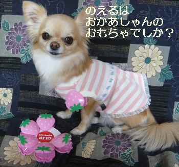blog2011040702.jpg