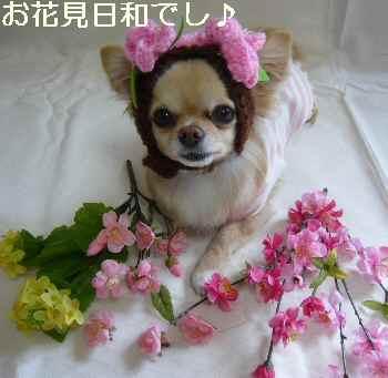 blog2011041001.jpg