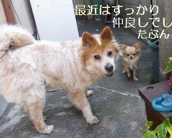 blog2011041303.jpg