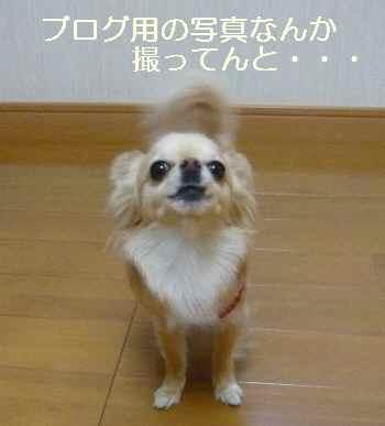 blog2011041401.jpg