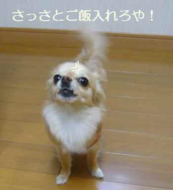 blog2011041402.jpg