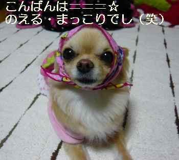 blog2011041701.jpg