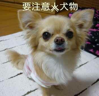 blog2011041905.jpg