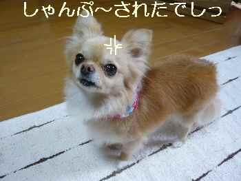 blog2011042001.jpg