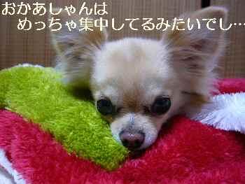 blog2011042703.jpg