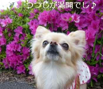 blog2011042805.jpg