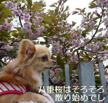 blog2011042806.jpg