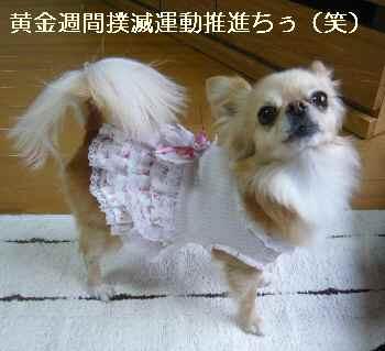 blog2011043003.jpg