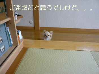 blog2011050402.jpg