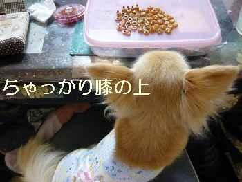blog2011050403.jpg