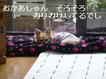 blog2011050601.jpg