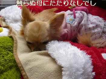 blog2011050602.jpg