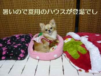 blog2011050801.jpg