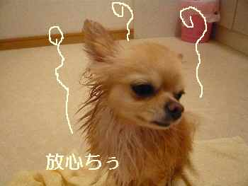 blog2011050903.jpg