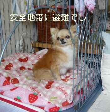 blog2011050904.jpg