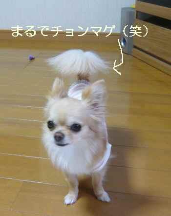 blog2011051003.jpg