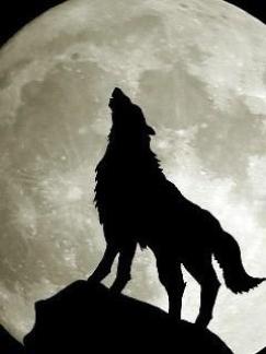 2011-4-4-オオカミのコピー