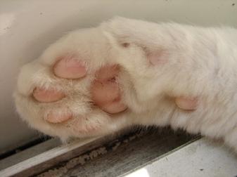 猫にくきゅう小
