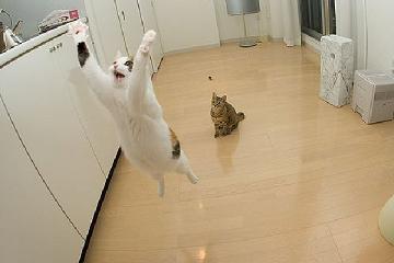 舞い上がり猫小