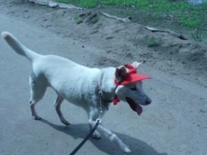 ジータ帽子2