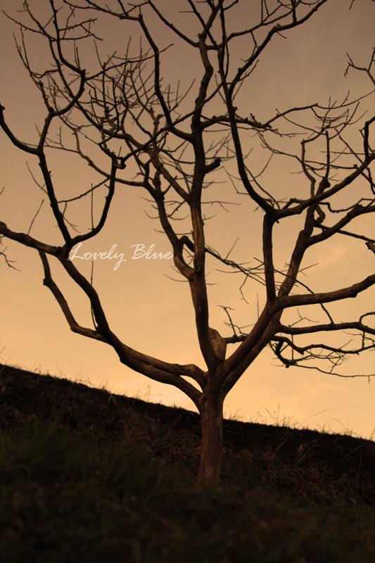 _MG_1177_edited-1.jpg