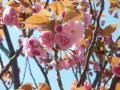 zouheikyokunsakurararararann77.jpg