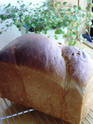 10.06.05黒糖食パン