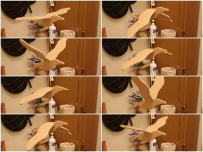 11.01.23羽ばたく鳥