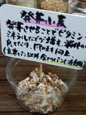 11.03.11カントリーグレイン_発芽小麦