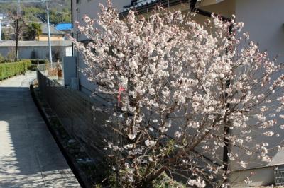 11.03.18花_通園の路に