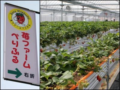 11.03.19イチゴ農園