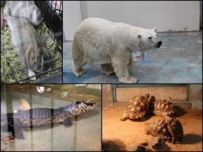 11.05.22徳山動物園_コラージュ