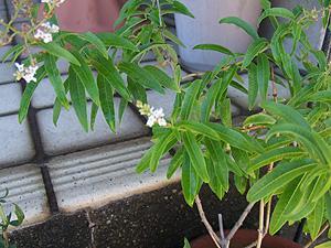 garden2011-7-13-1.jpg