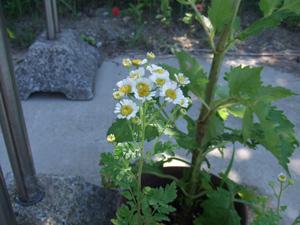 garden2011-7-13-2.jpg