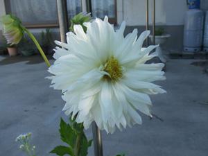 garden2011-7-13-3.jpg