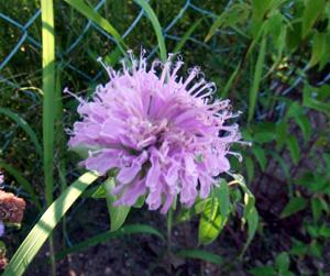 garden2011-7-13-4.jpg