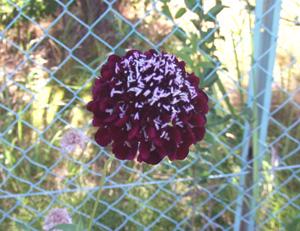 garden2011-7-13-5.jpg