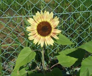 garden2011-7-13-6.jpg
